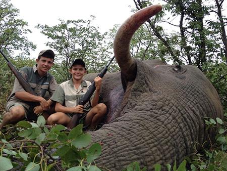 Newsletter 34 Elephant 2