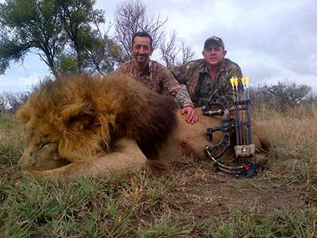 Newsletter 34 Lion