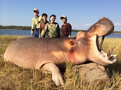 Newsletter-35-Hippo-2