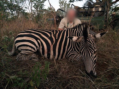 Newsletter-35-Zebra-1-new