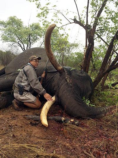 newsletter-40-elephant1
