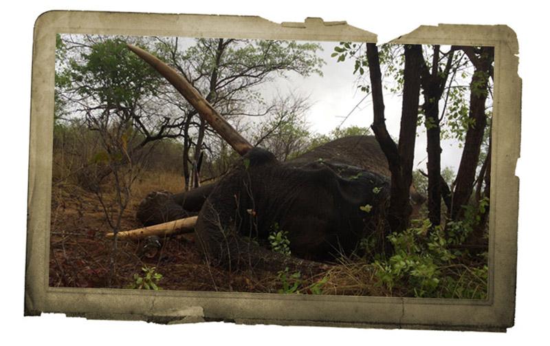 Elephant photo 2