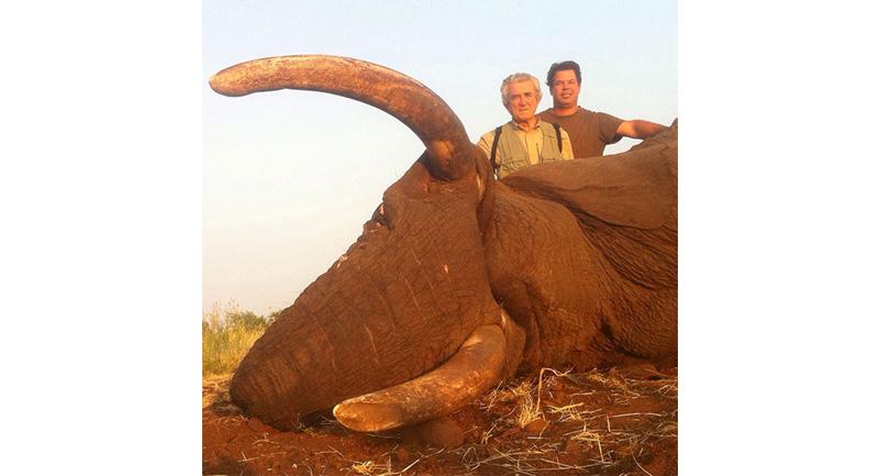 newsletter-43-elephant2