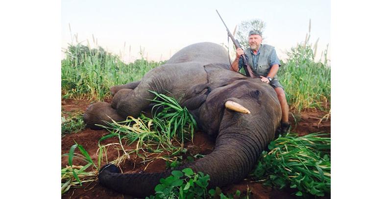 newsletter-43-elephant3