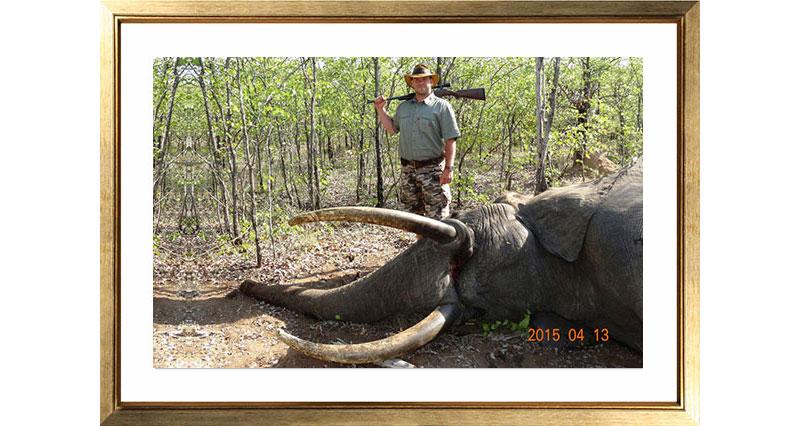 Picture-1-Elephant
