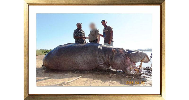 Picture-2-Hippo