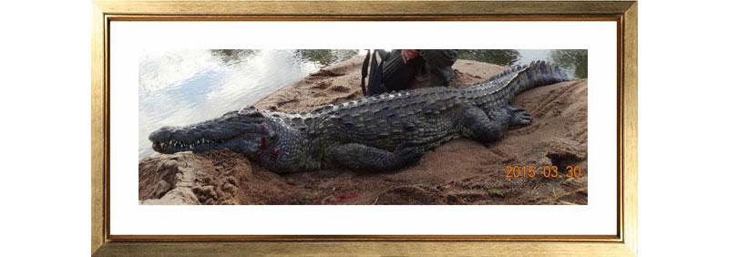 Picture-3-Crocodile